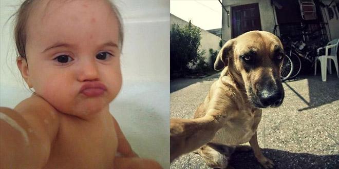 selfies: les improbables