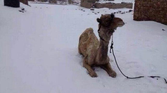 neige egypte moyen orient température basses rare météo
