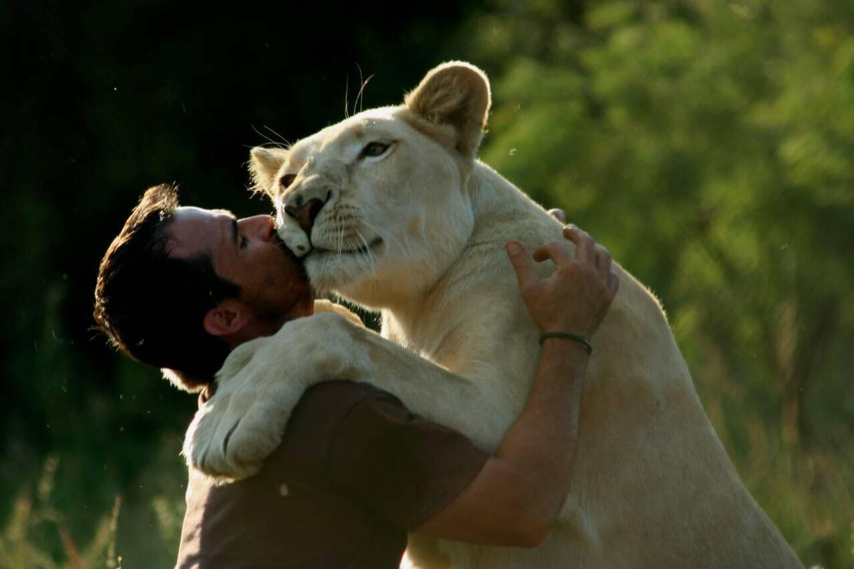 lionne kevin richardson lion go pro bisou
