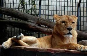 Mexique lions villa mexique