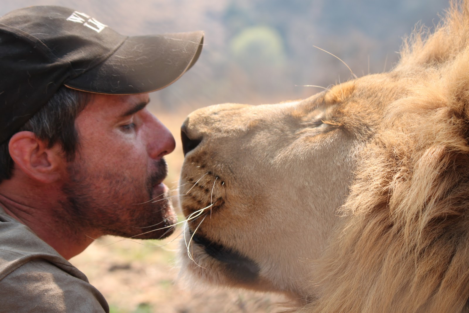 kevin richardson lion go pro bisou