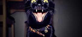 chats reveil matin