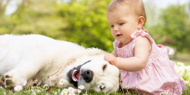 frank le chien malade qui aide les enfants atteints de la meme maladie
