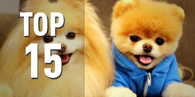 top 15 animaux chous