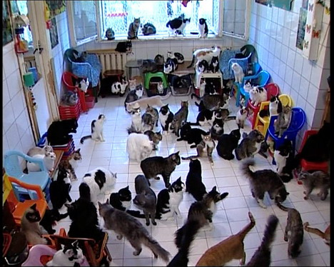 les 130 chats