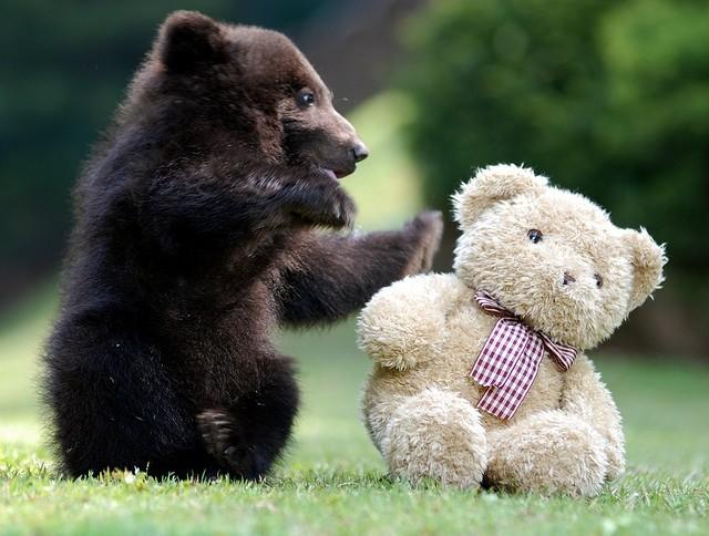 ours et son doudou