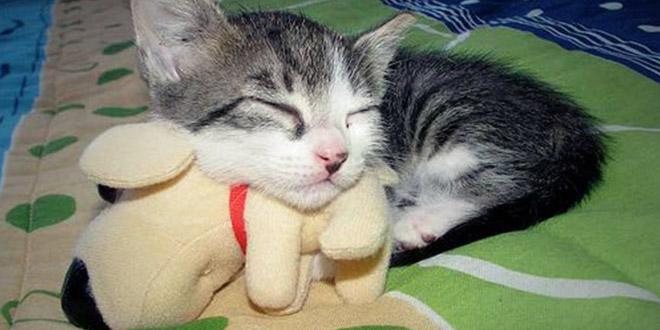 chat dort avec son doudou