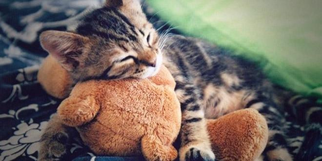 chat-et-sa-peluche