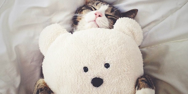 chat-et-son-doudou calin