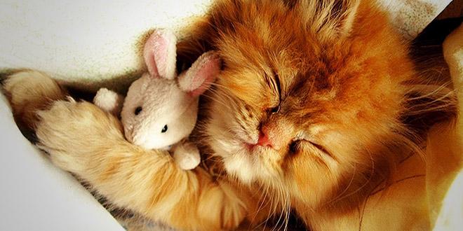 chaton et son doudou