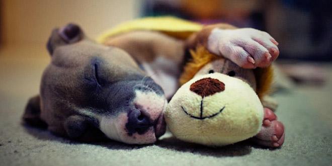 chien et sa peluche