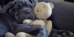 chien et son ours en peluche