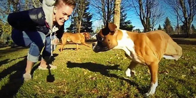 duncan chien a deux pattes