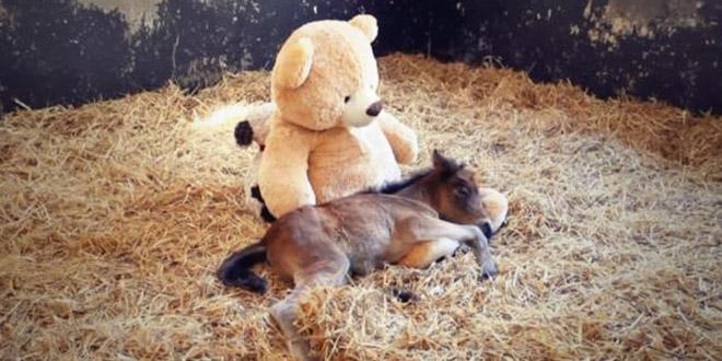 poney et son ours en peluche