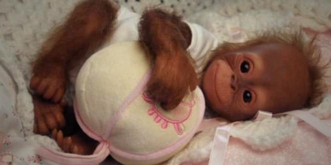 singe avec son doudou