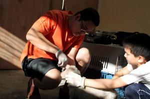 vétérinaire chiens abandonnés