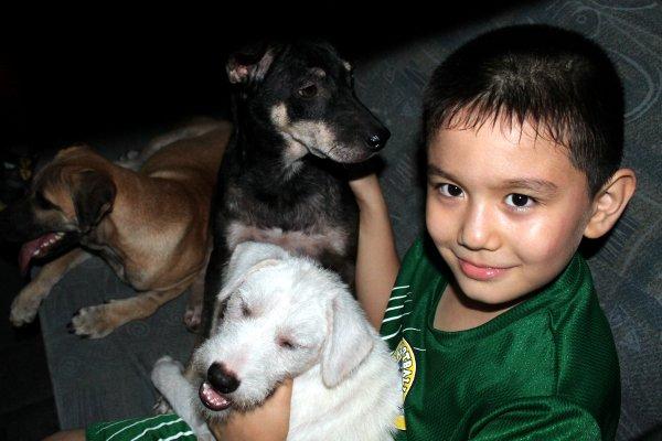 ken et les chiens