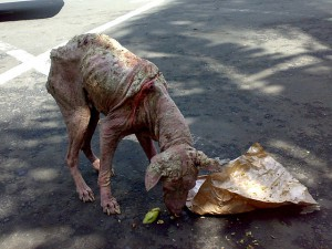 chien abandonné