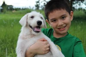 chien adopté