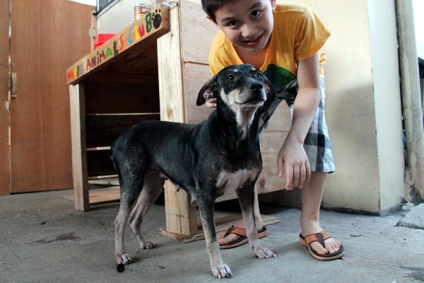 adoption chien