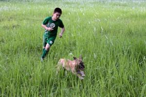 refuge chiens