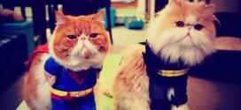 cat super heros