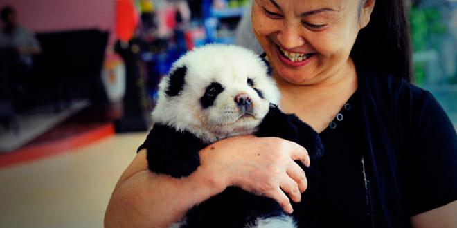 chine chien panda