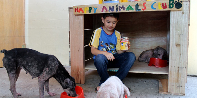happy animal club l'abri construit par un enfant de 9 ans