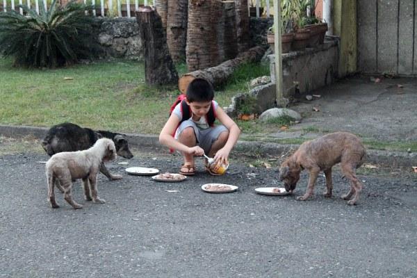 abri pour animaux abandonnés