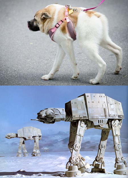 pig chien robot at-at star wars