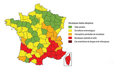 Moustique tigre carte alerte france