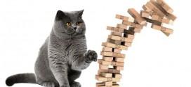 chat jenga jeu