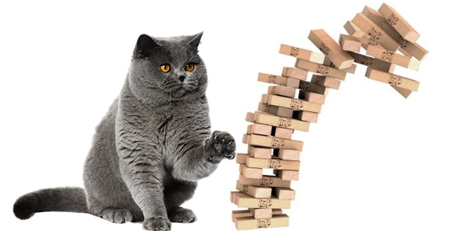 ce chat est un expert du jeu jenga. Black Bedroom Furniture Sets. Home Design Ideas