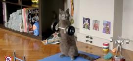 chat muscu pub parions web sport