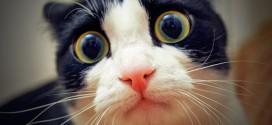 chats disparus essonne
