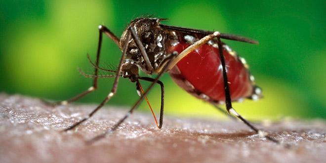 Study: Effective vaccine against dengue found