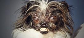 peanut chien le plus laid