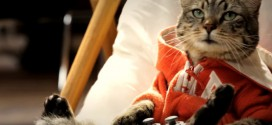 winston chat wonderfulls cat of duty
