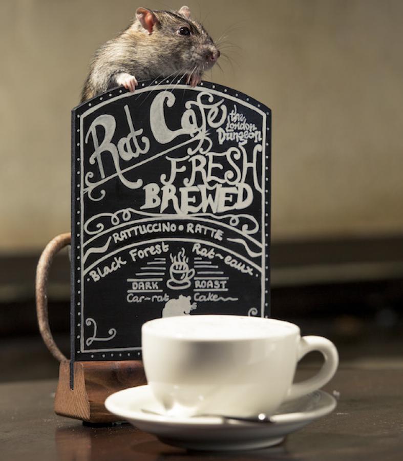 bar a rats londre