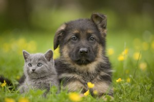 chiots chatons
