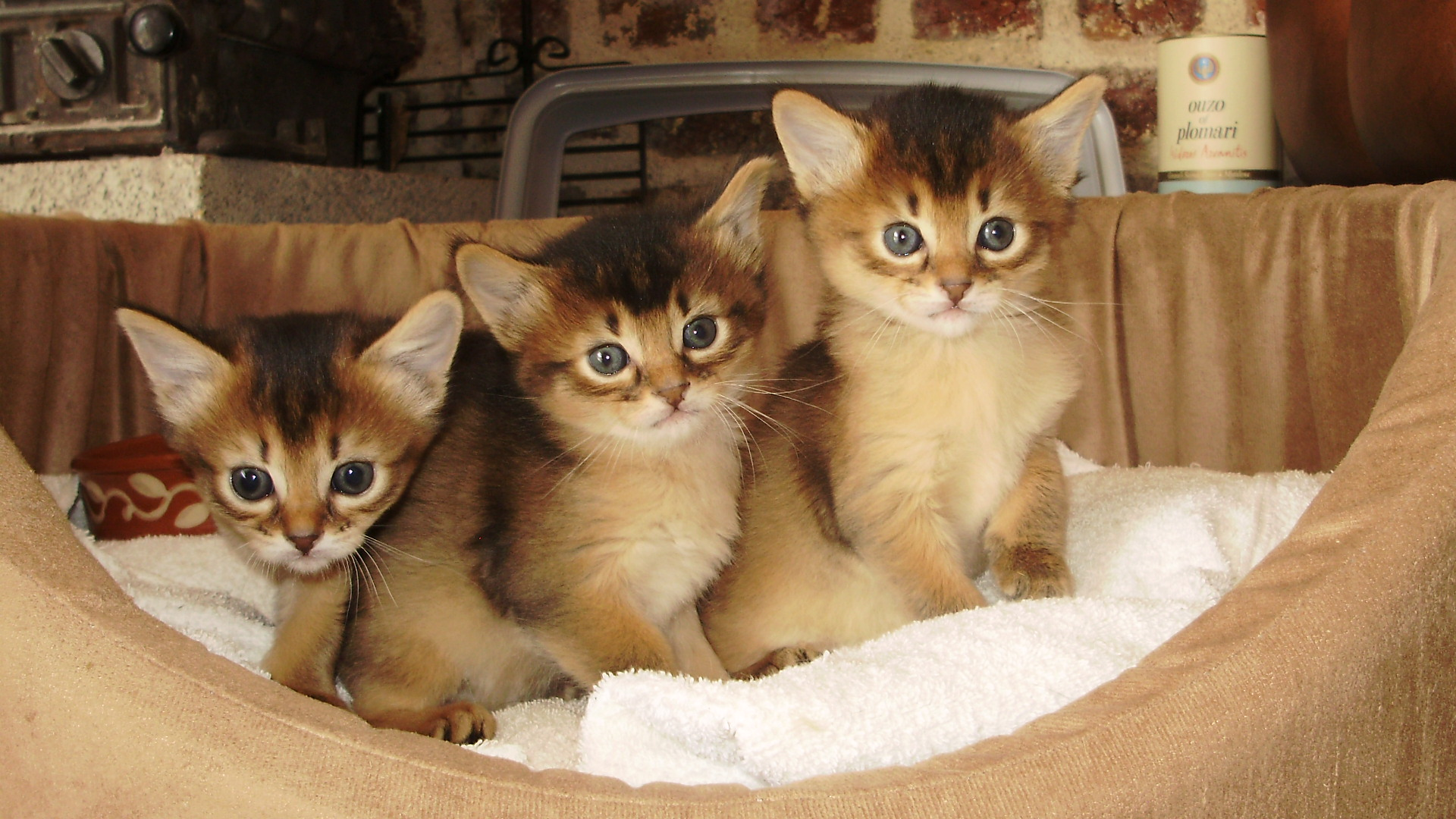 chatons chenil