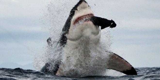 attaque de requin a l'exposition james bond