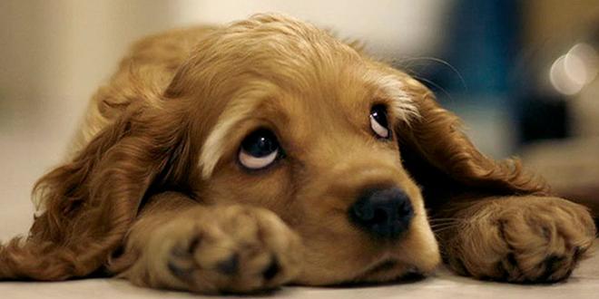chien cupabilite charlie