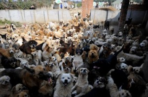 dogs_and_cats_06