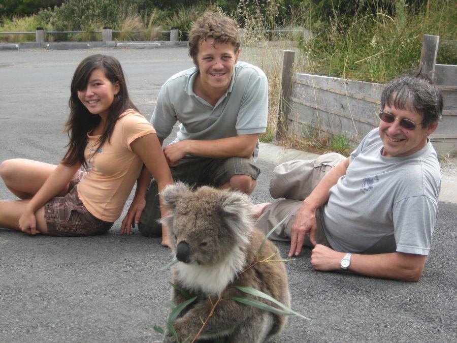 koala agrippé accroché arrière voiture 90 km autoroute australie buzz histoire insolite