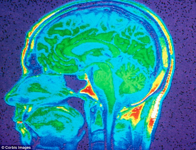 gerne ska2 cerveau hormones