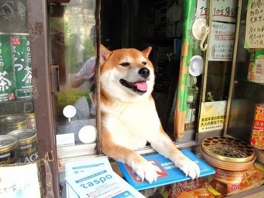 chien shiba vendeur tabac japon