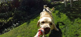 gopro fetch cover
