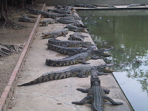 zoo crocodiles bangkok