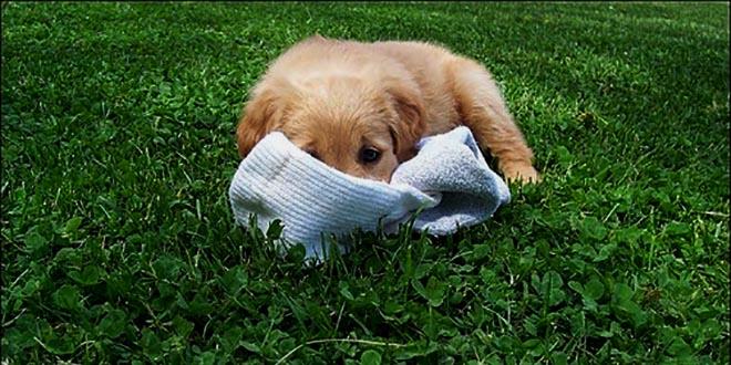 chien chaussettes cover